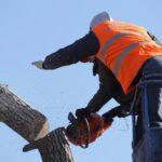 Taglio di un albero con motosega
