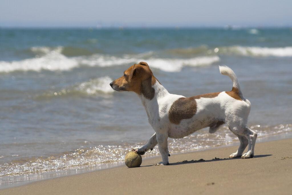 Spiaggia per cani a Principina a Mare
