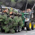 Taglio dei pini in viale Tirreno a Principina a Mare