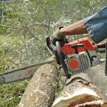 Nuovo taglio dei pini a Principina